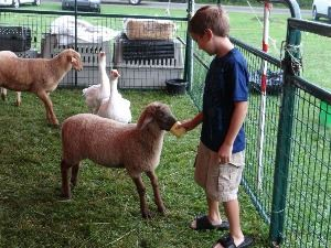 August Fun Fest petting zoo