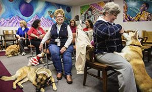 Westmoreland County court therapy dogs and their volunteer handlers