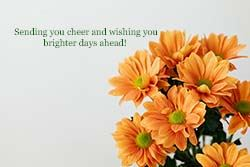 "peach flowers on white background with text ""sending you cheer and wishing you brighter days ahea"