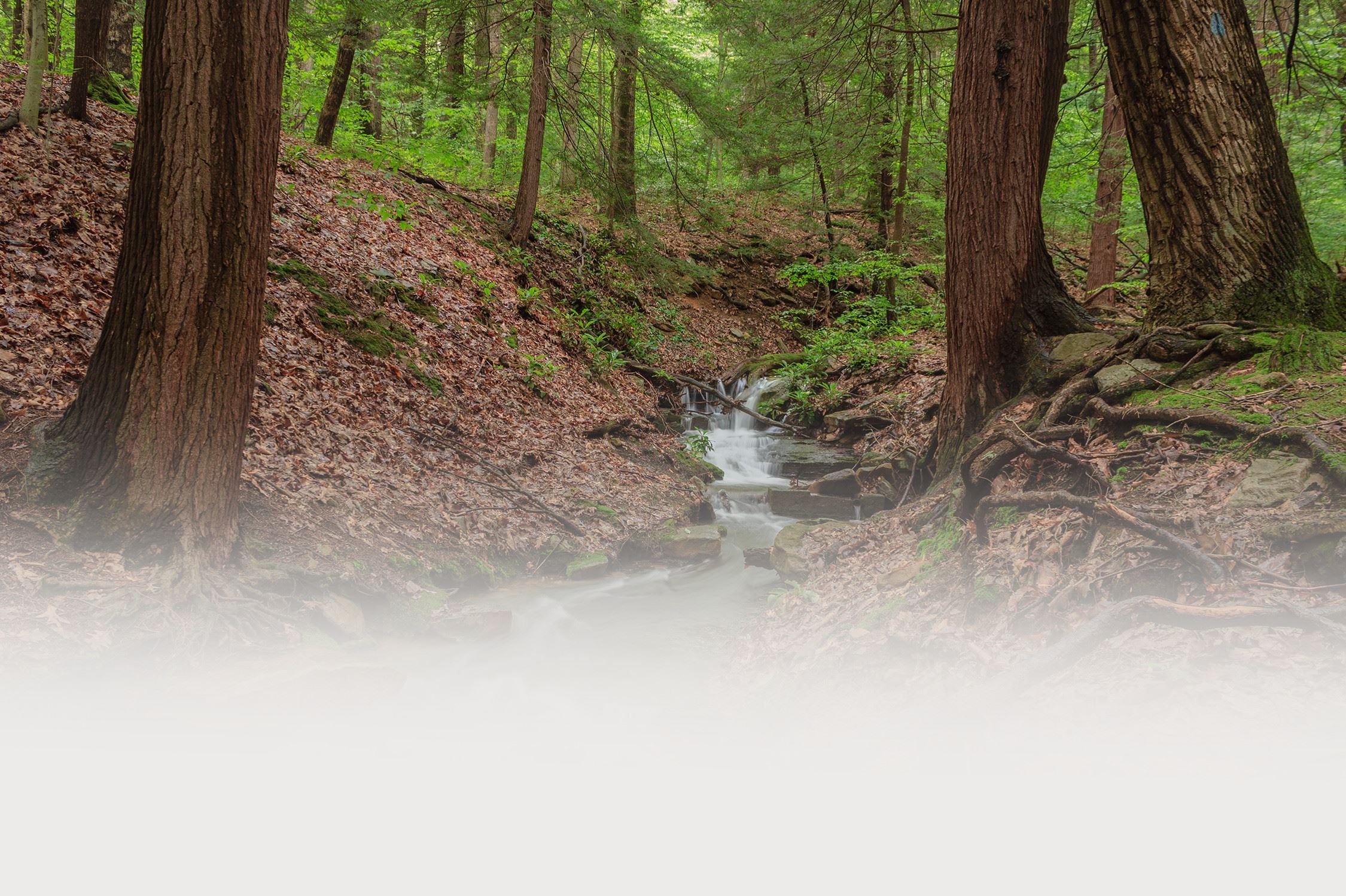 Cedar Creek Park   Westmoreland County, PA - Official Website